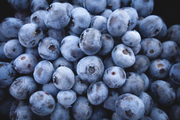 blueberries - jeremy ricketts